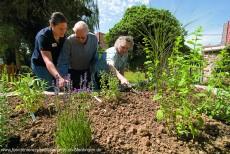 Hochbeet im Garten des DRK-Seniorenzentrums Oferdingen
